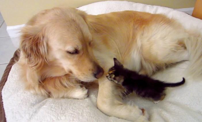 大型犬と子猫