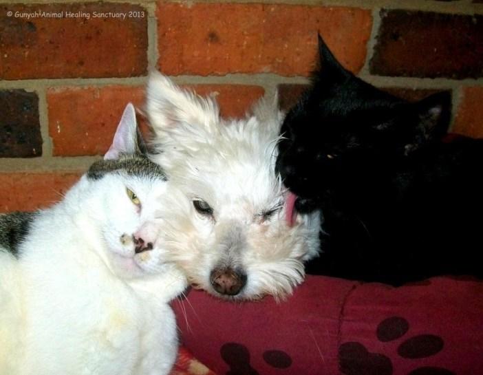 いい表情の猫と犬