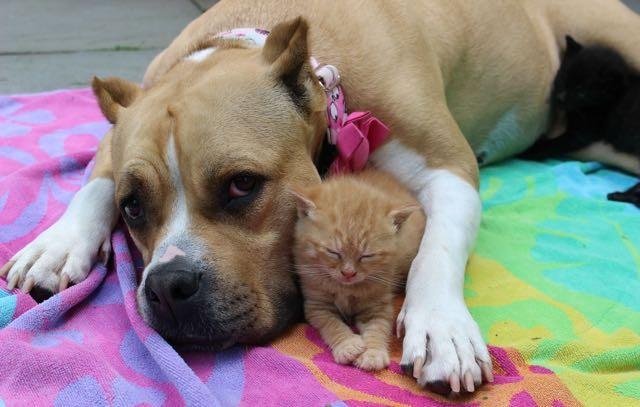 犬に守られる子猫