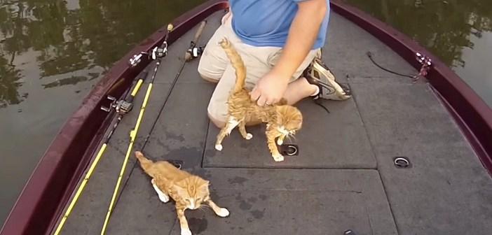 ボートの上の子猫