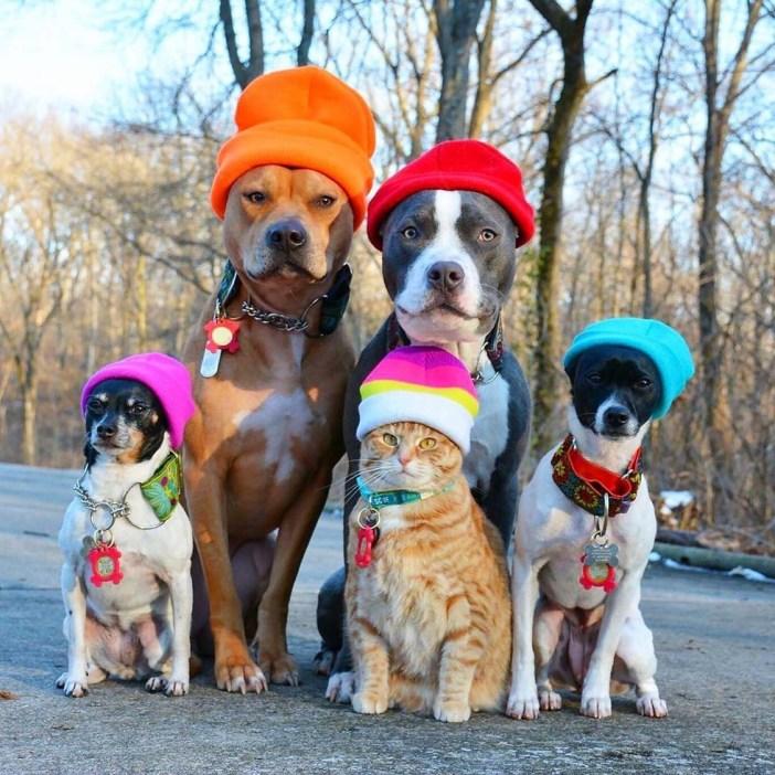 帽子を被った猫と犬