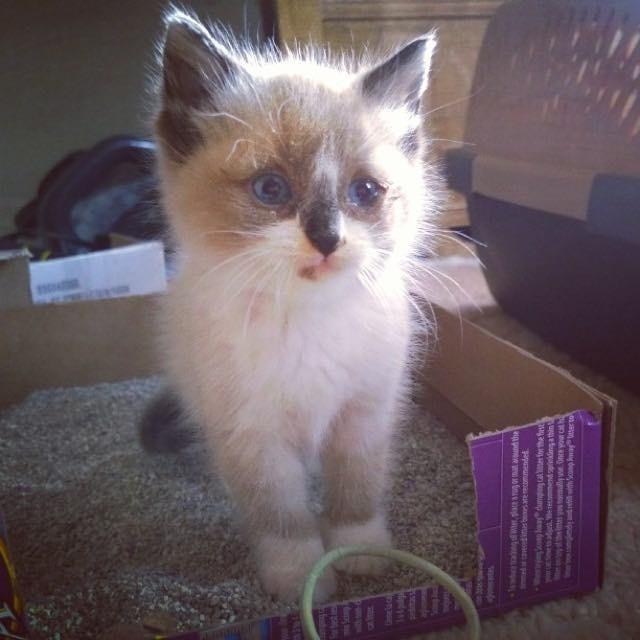 不思議な顔の子猫
