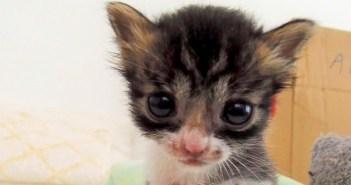 竹やぶの中で死の淵を彷徨っていた子猫。必死の鳴き声が女性の耳に届いて… (10枚)
