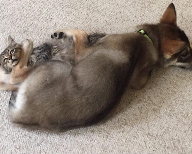 一緒に遊ぶ犬と猫