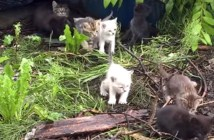 10匹の子猫達