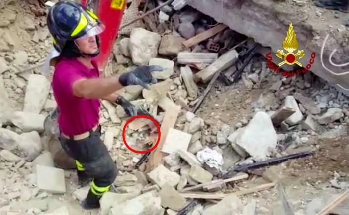 瓦礫の中の猫