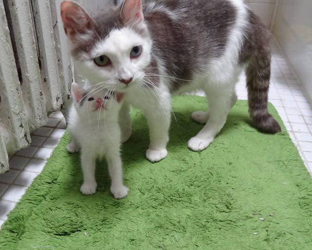 子猫を大切にする猫