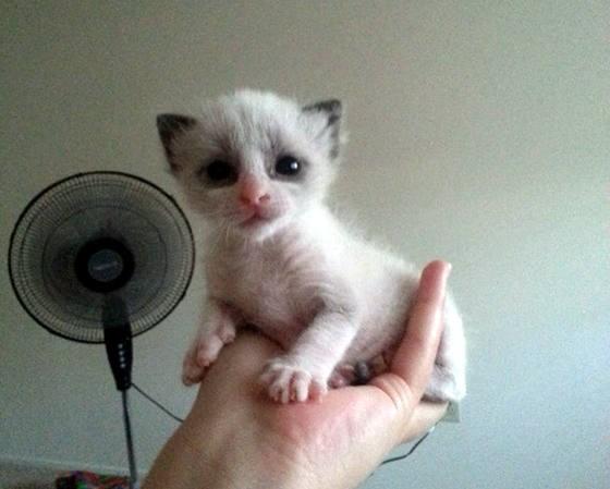手に乗る子猫