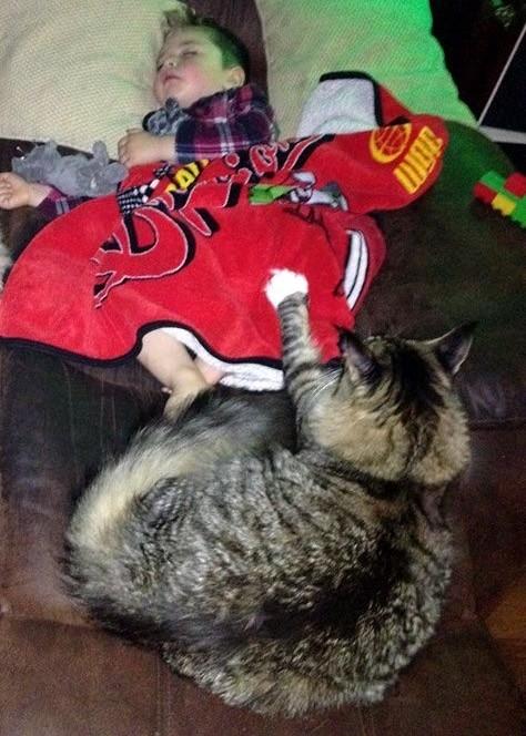 男の子を見守る大きな猫