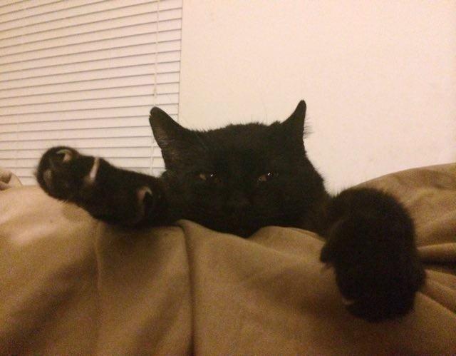 くつろぐ黒猫