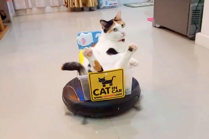 ルンバに乗る猫