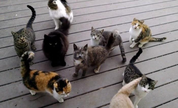わさわさする猫