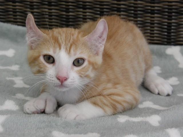 丸まり子猫