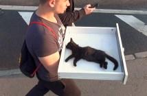 男性に運ばれる猫