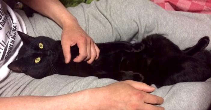 膝に入る黒猫