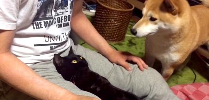 飼い主さんの膝を楽しむ猫