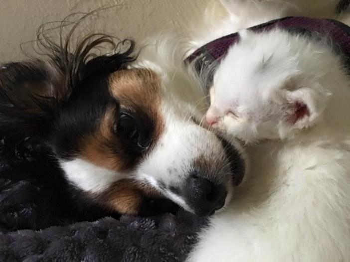 幸せそうな犬と猫