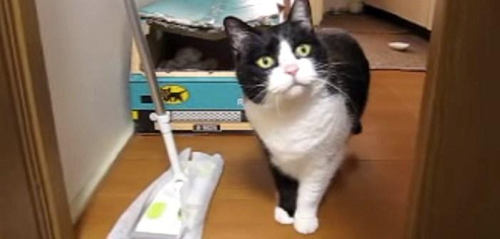もの申す猫