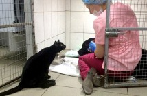 動物病院で動物達を看病する黒猫