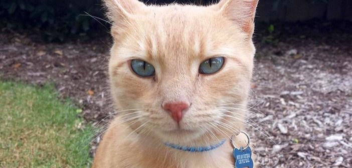 ジョギング中に見つけた猫