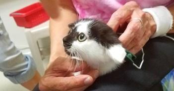 麻痺した猫