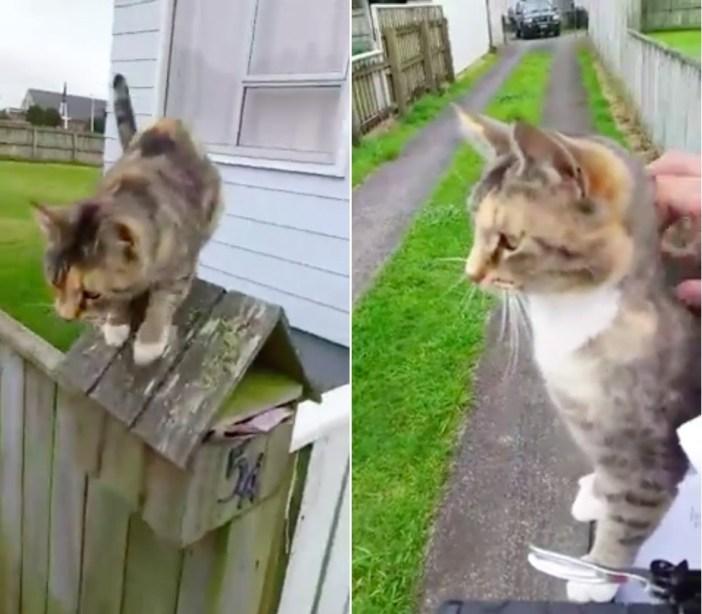 郵便配達員にナデナデを要求する猫