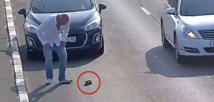 子猫を道路で助ける男性