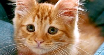 心配顔の猫