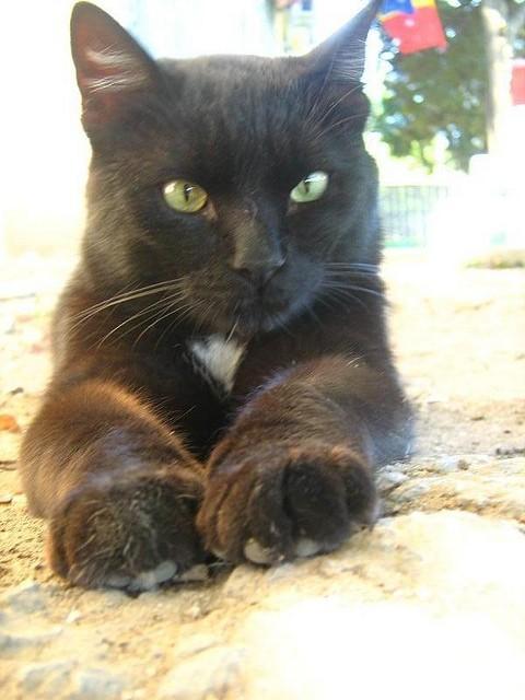 大きく成長した猫