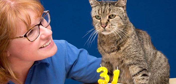 31歳の老猫