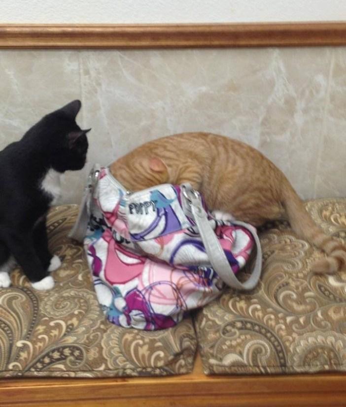 カバンを探る猫