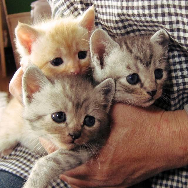 大きくなった子猫達