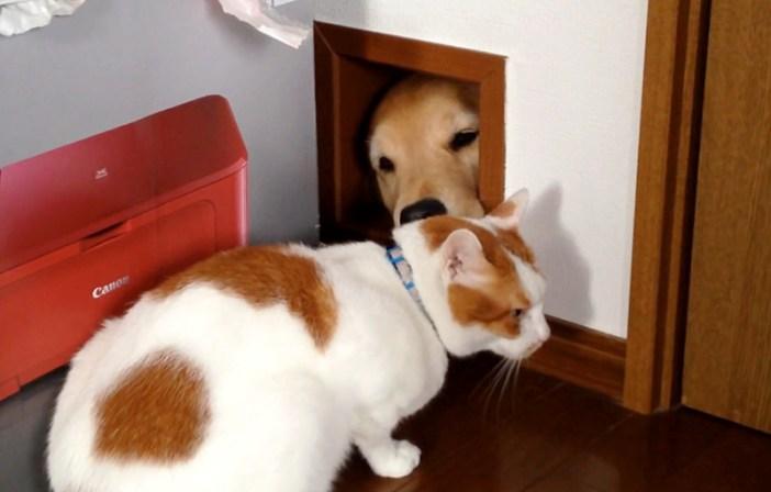 猫用通路を通せんぼする犬