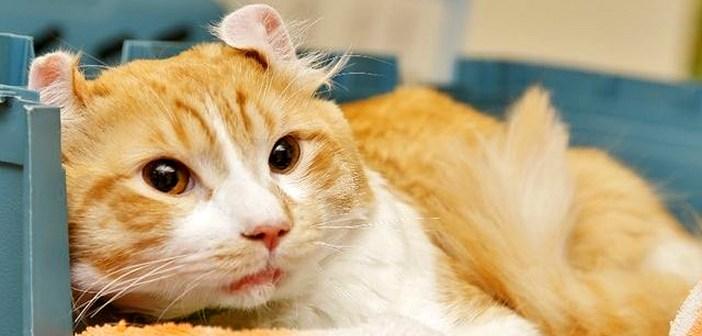 高速道路で保護された猫