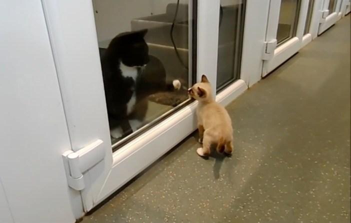 出会う子猫