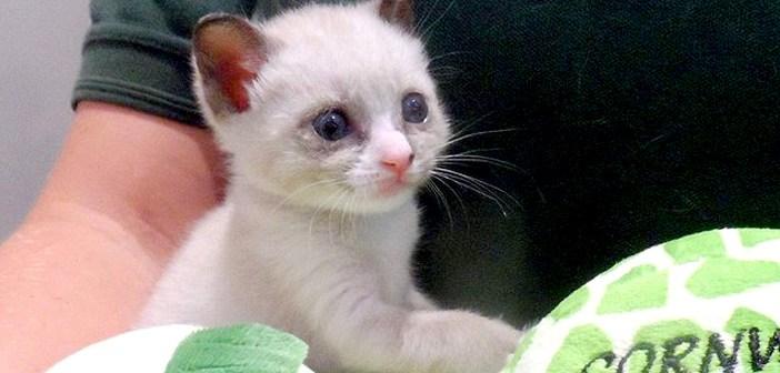 蘇った子猫