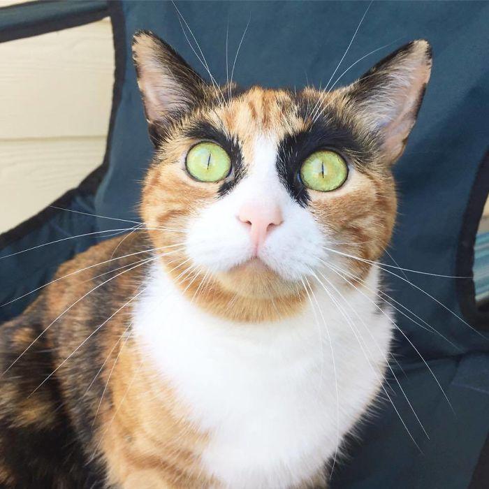 力強い眉毛猫