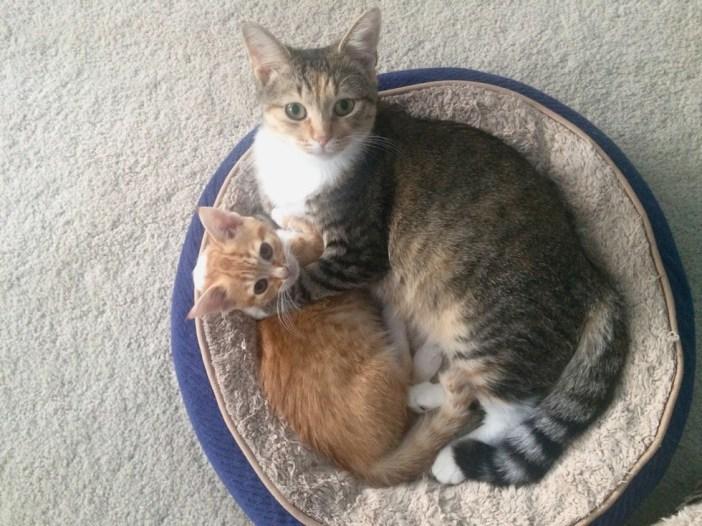 抱きしめる猫の親子