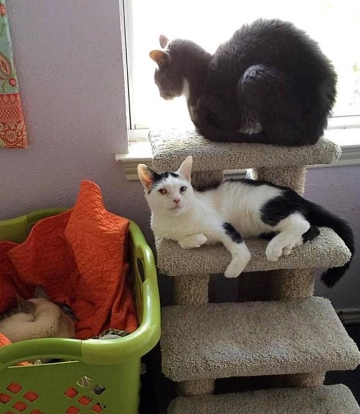 お友達と猫