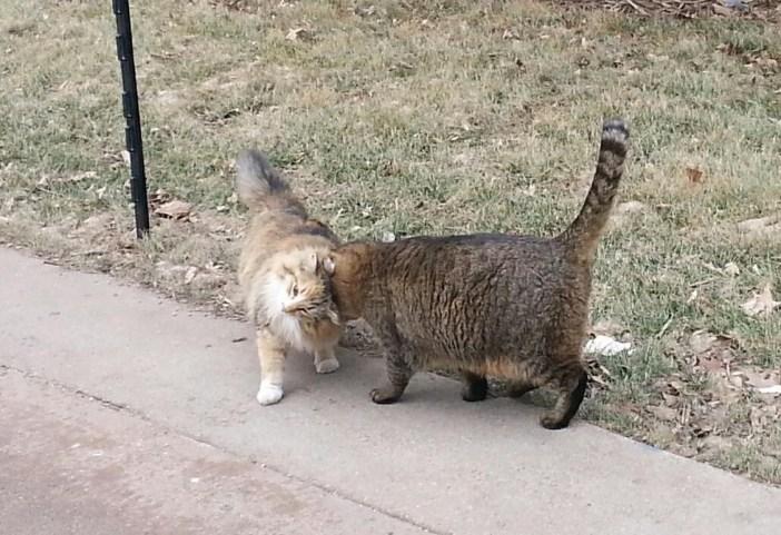 仲良しな猫
