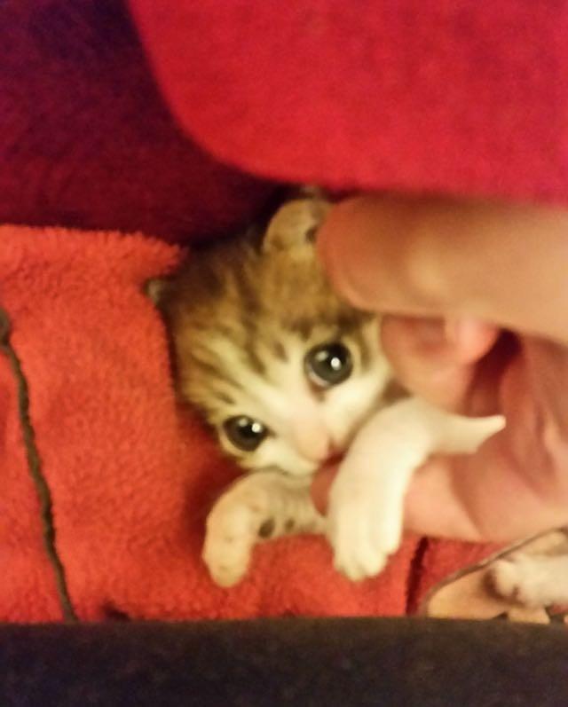 目がキラキラしている子猫