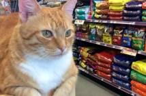 ペット用品店の猫