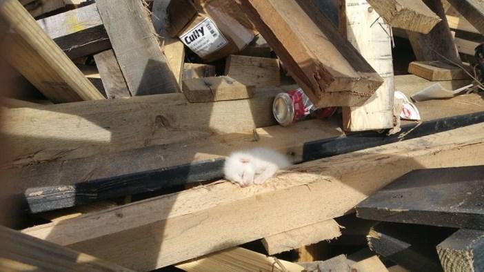 材木の間の子猫