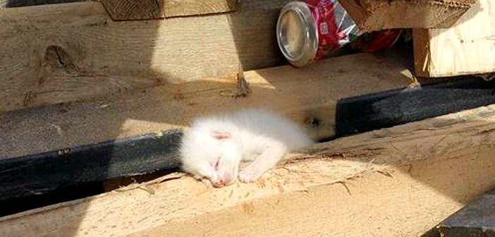 材木の中の子猫