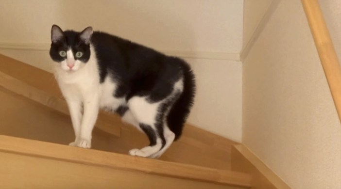 ドキドキする猫