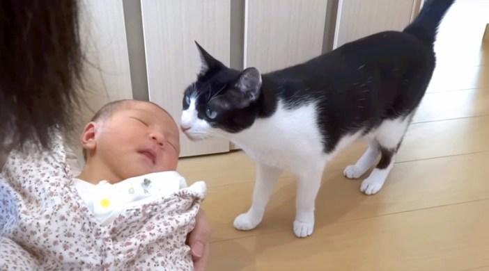 2人目の赤ちゃんと猫