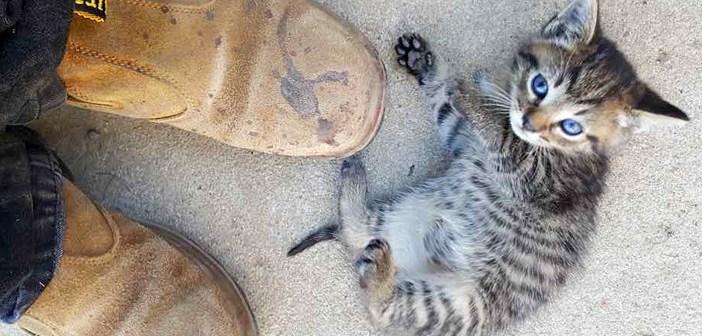 足元の子猫