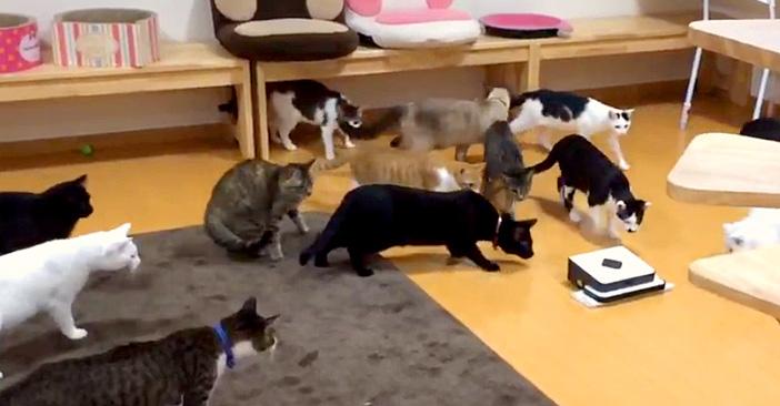 お掃除ロボットと猫
