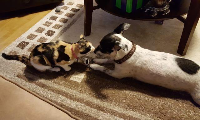 犬と猫と子供