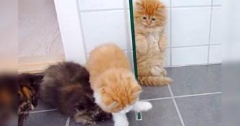 オモチャにドキドキする子猫